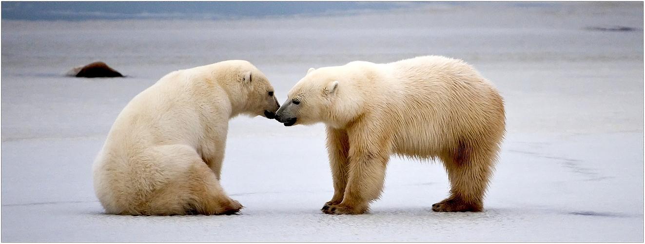 [ Polar Friendship ]
