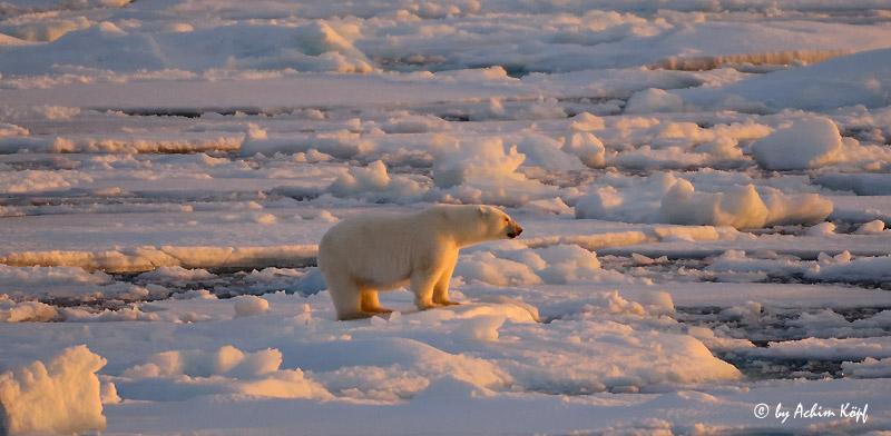 Polar Quest #672