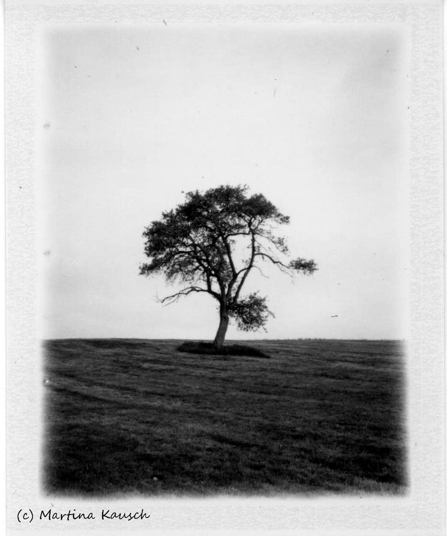 Polaroid: Alter Obstbaum auf Wiese