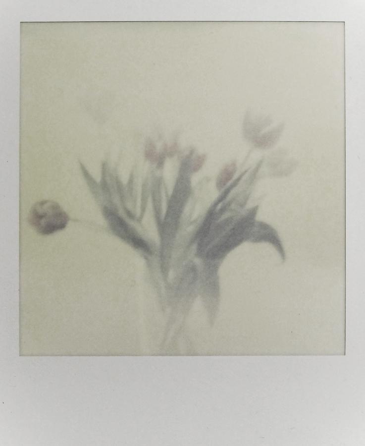 Polaroid (Tulpen)