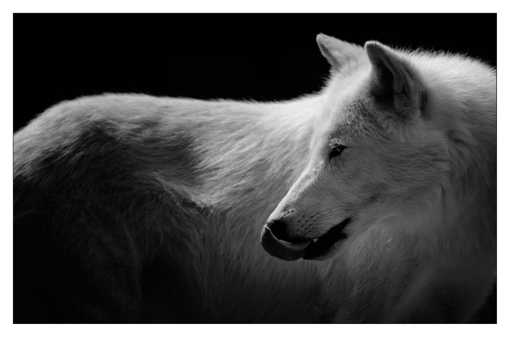 - polarwolf -