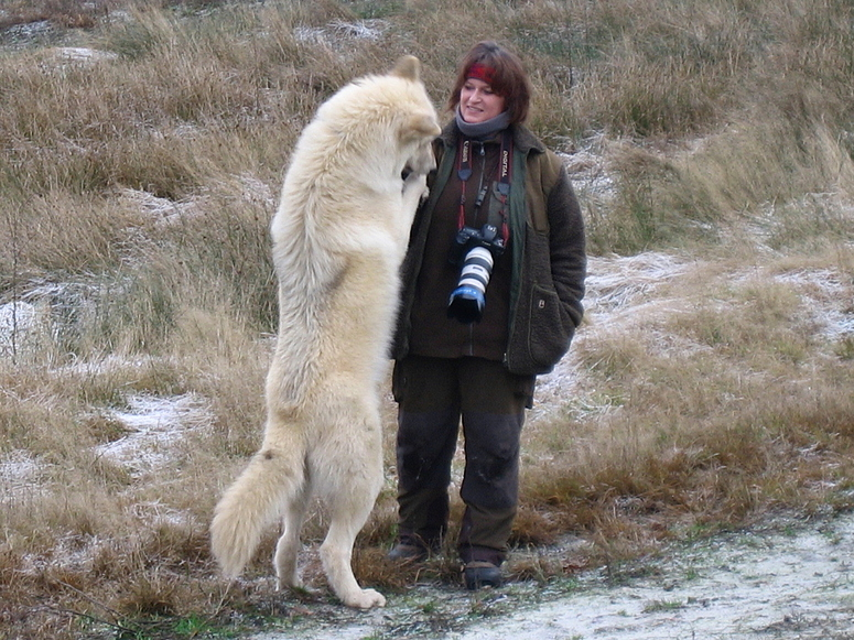 "Polarwolf ""Baby"" Noran mit Mama Tanja A."