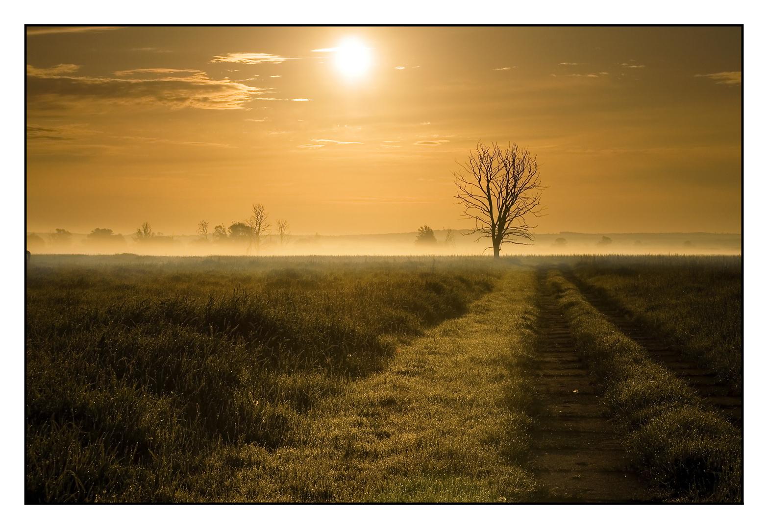 Polder im Morgennebel 2