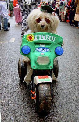 Polizeihund Rosenmontag Köln