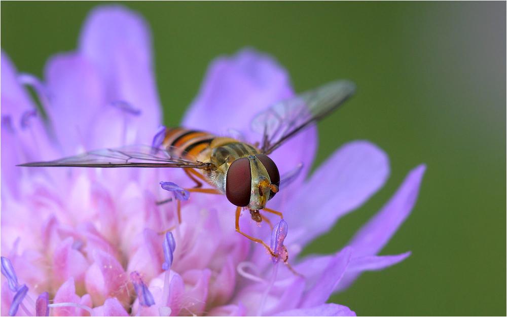 Pollen am Stiel