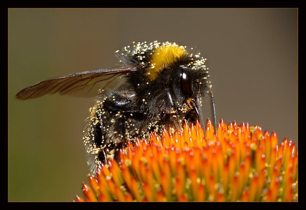 ++ pollen-cargo ++