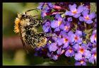 ++ pollen-flug ++