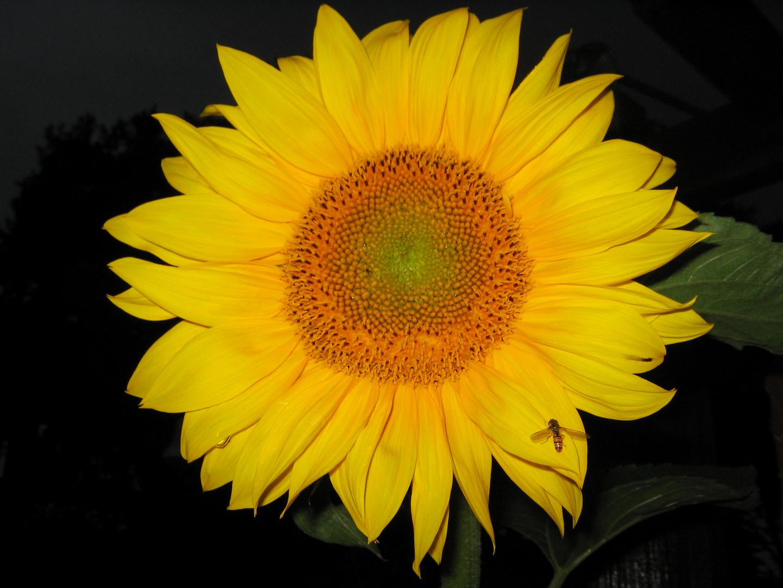 Pollenanflug