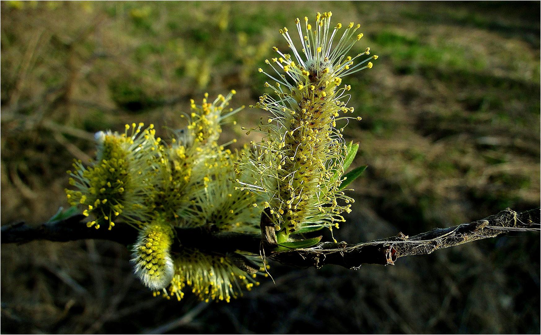 Pollenbar ...