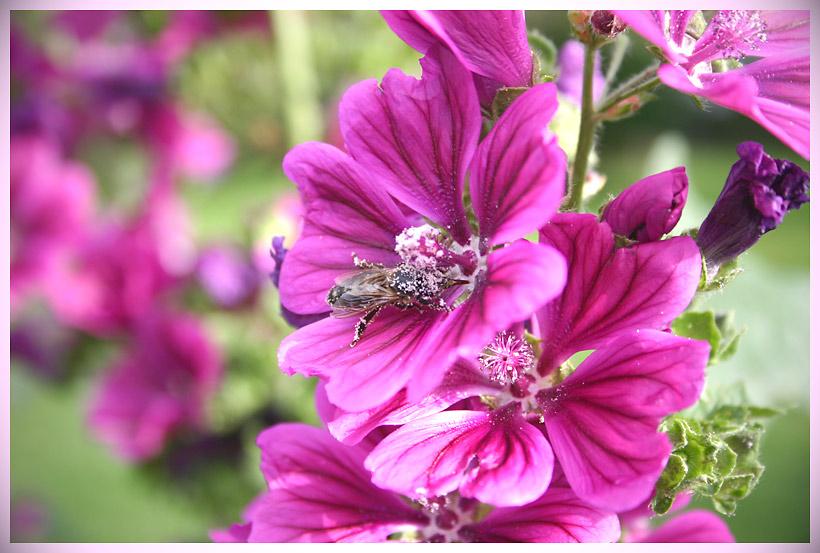 ...pollenbestäubt !