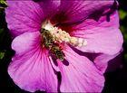 Pollendusche