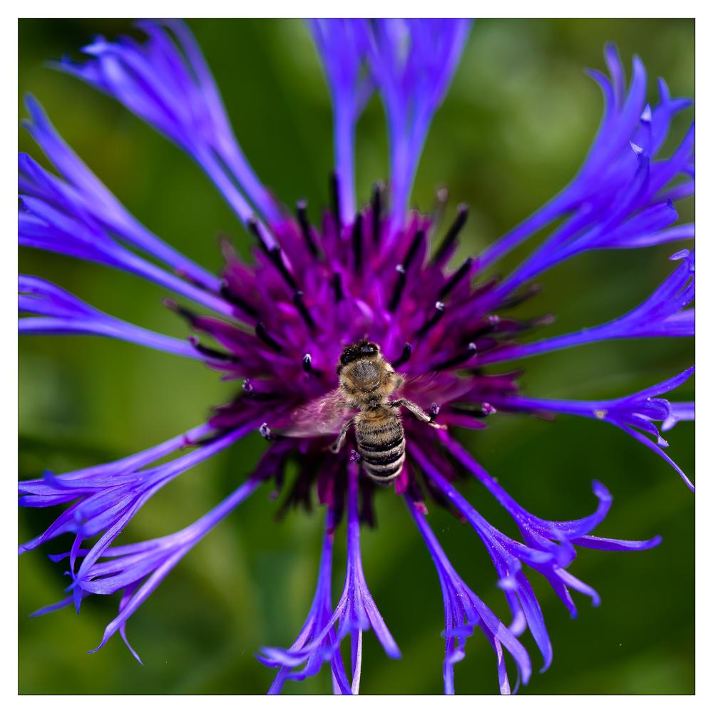 pollenflug.