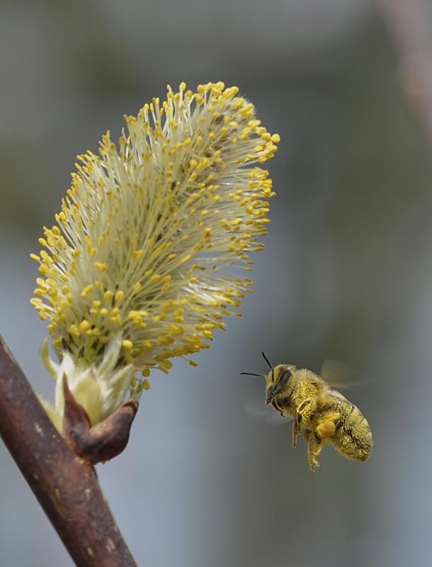 Pollenflug :o)