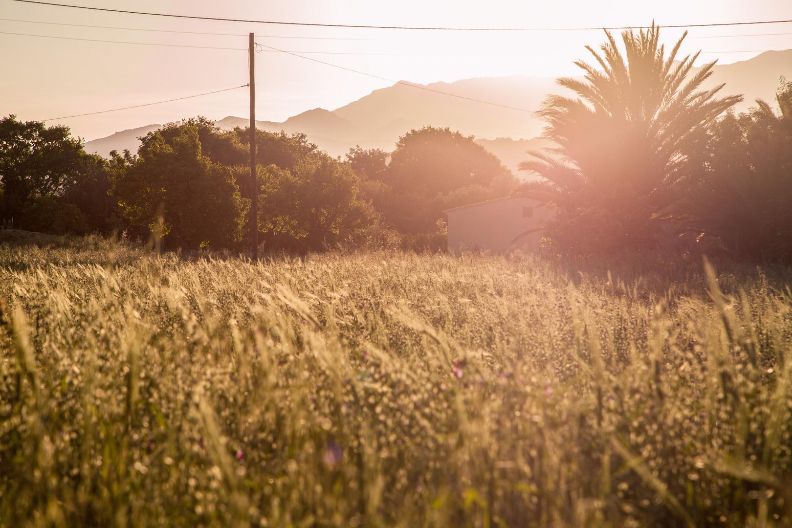 Pollensa Sundown