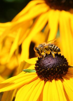 Pollensammler... 3