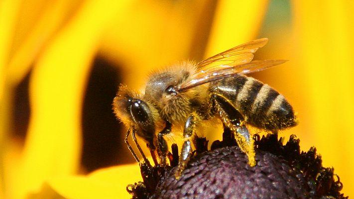 Pollensammler...2