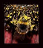 Pollensucht