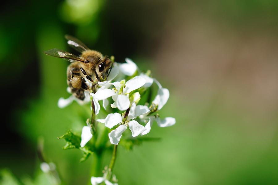 ... Pollensucht  ...