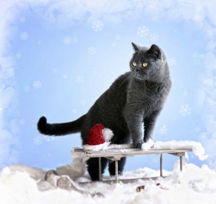 ... Polly im Winter ...