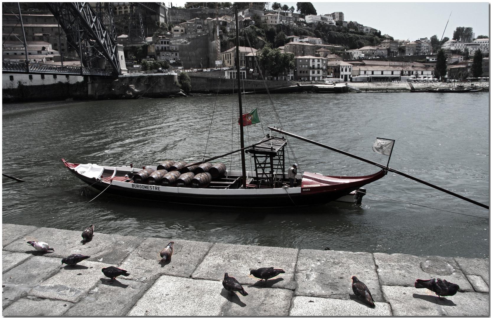 Pombos e vinho no Douro