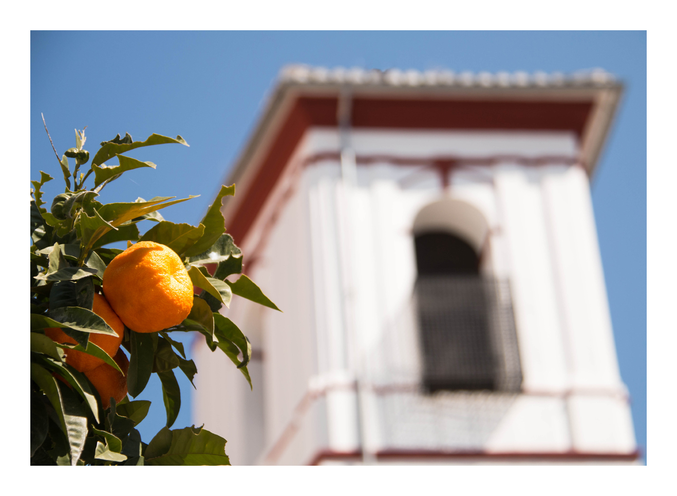 Pommeranzen in Granada