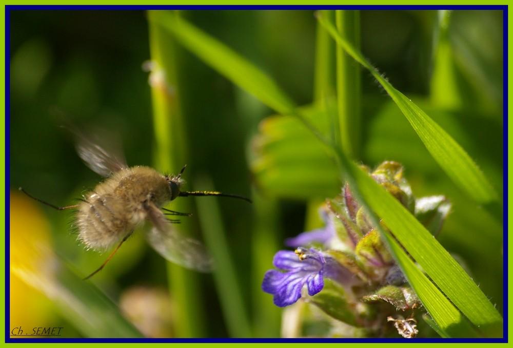 pompe a pollen