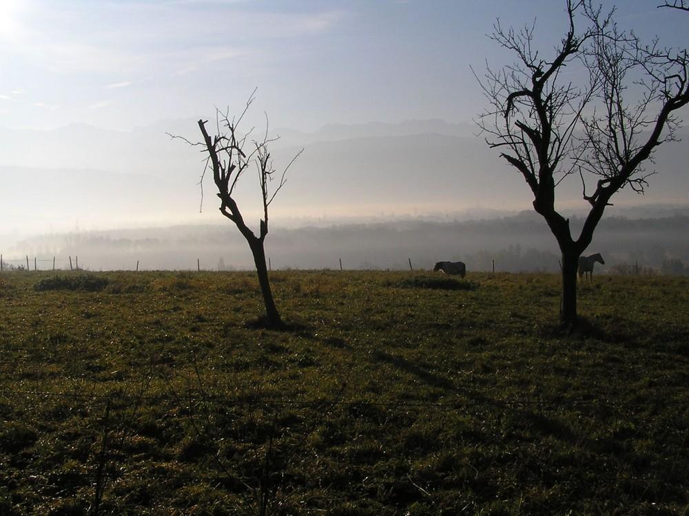 Poney dans la brume