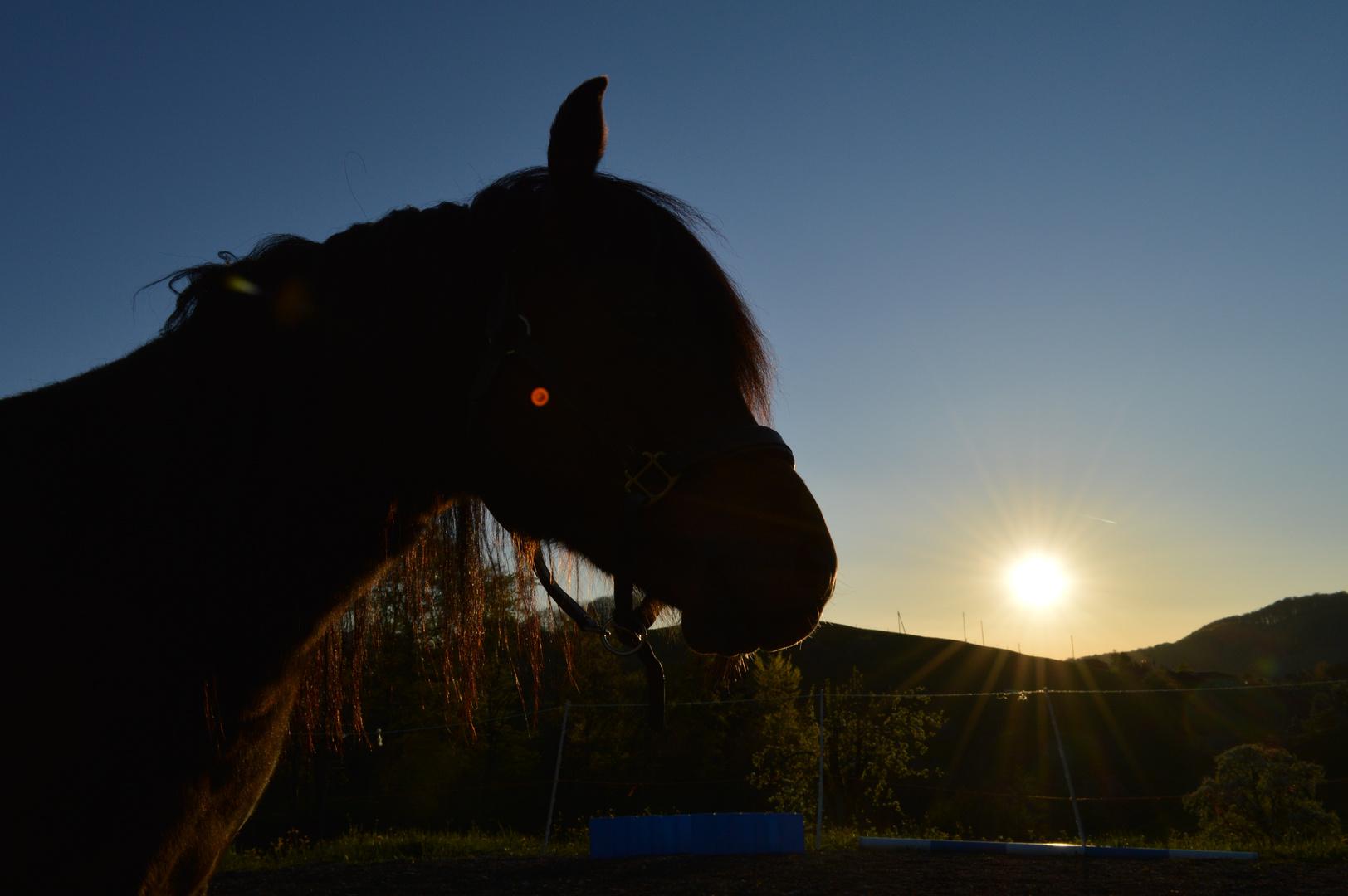 Ponny im Sonnenlicht