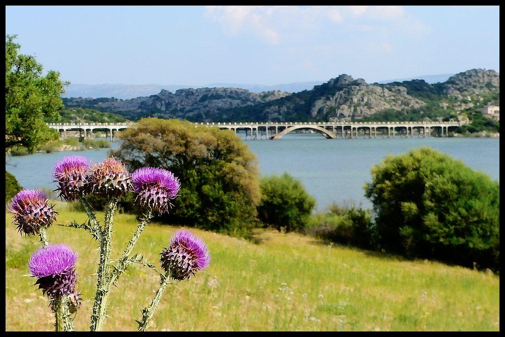 Ponte Diana Lago Coghinas Sardegna