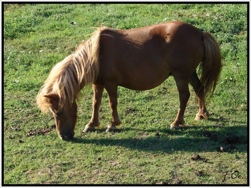 Pony......!!!!!