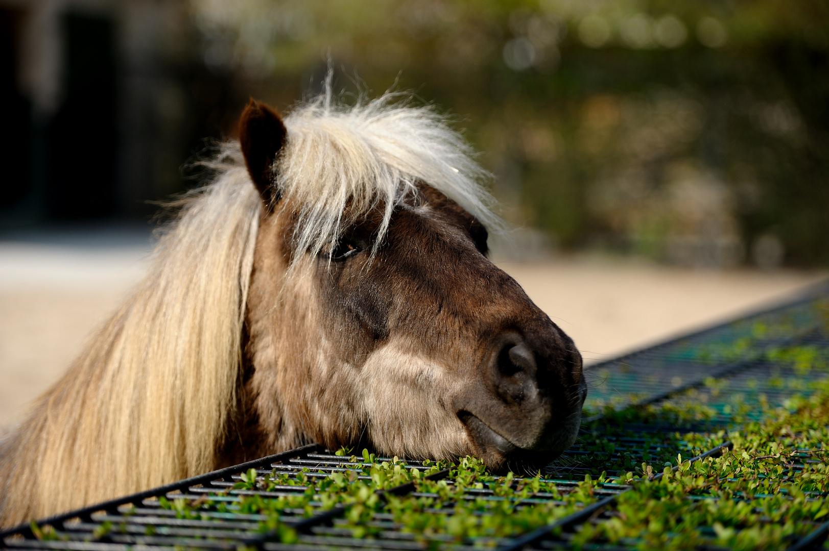 """""""Pony"""""""