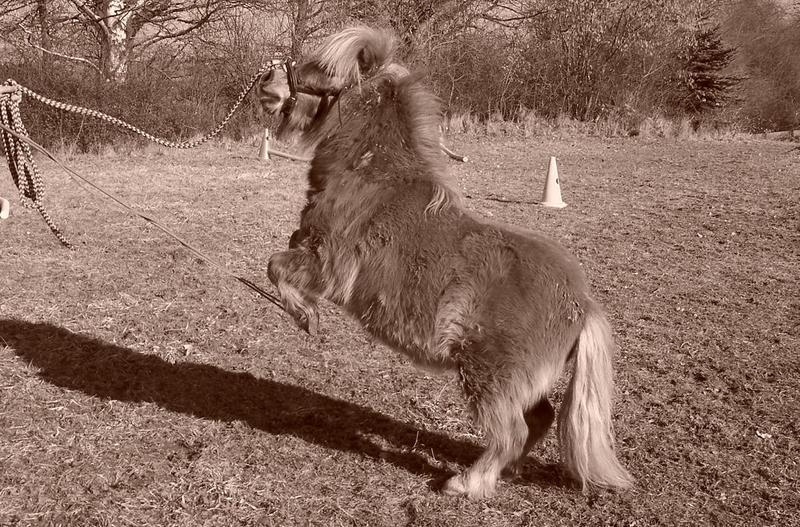 Pony Diego zeigt was er kann!