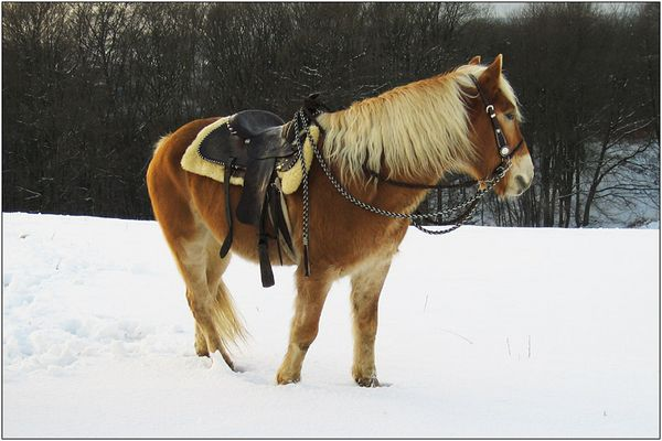 Pony im Schnee.