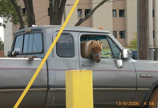 pony-in-a-truck