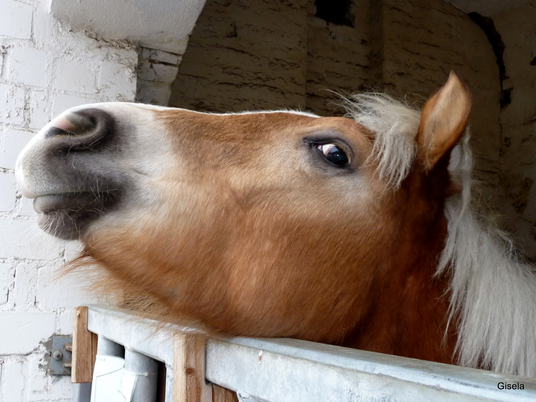 Pony in der Domäne Mechthildshausen