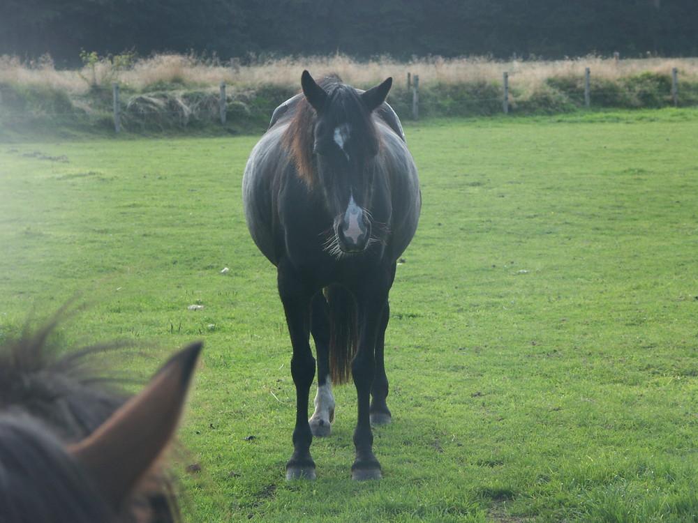 Pony in der Nebellandschaft