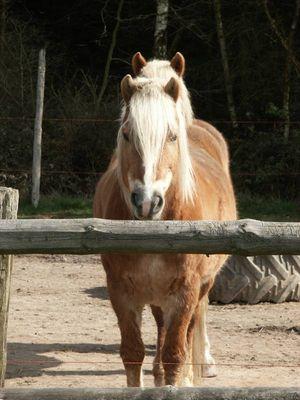 Pony mit 4 Ohren
