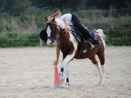 pony mounted games 2