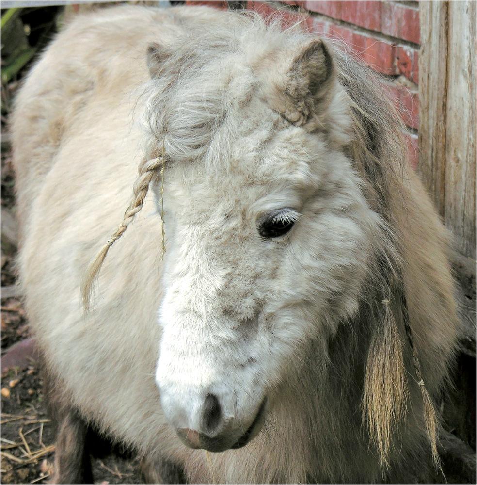 Pony - Porträt