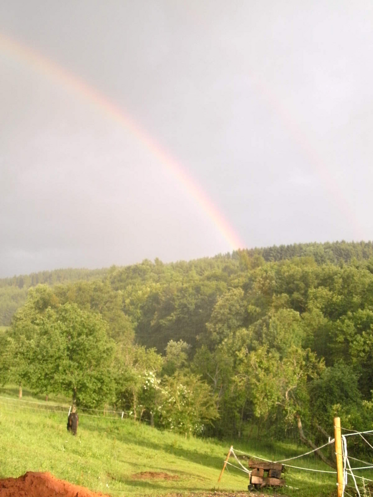 Pony unterm Regenbogen