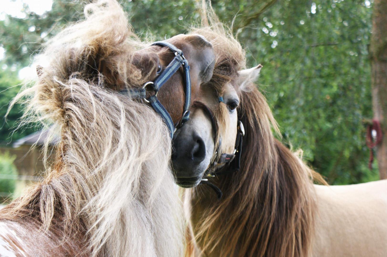 Pony - Wirrwarr