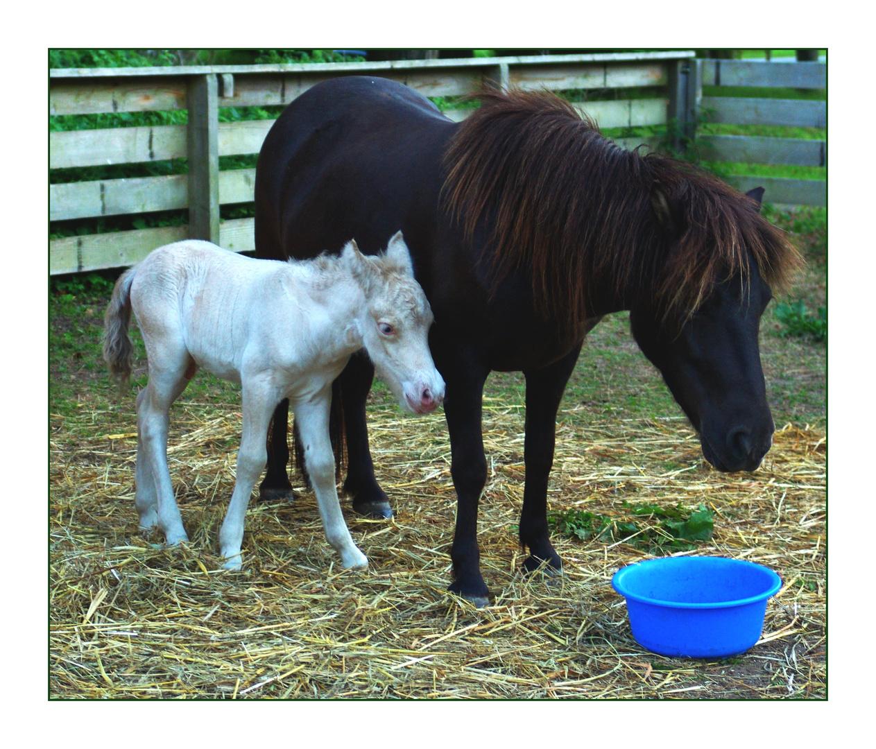 Ponybaby