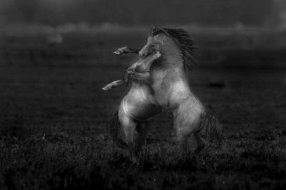 Ponybalgerei