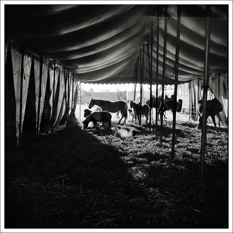 Ponypups