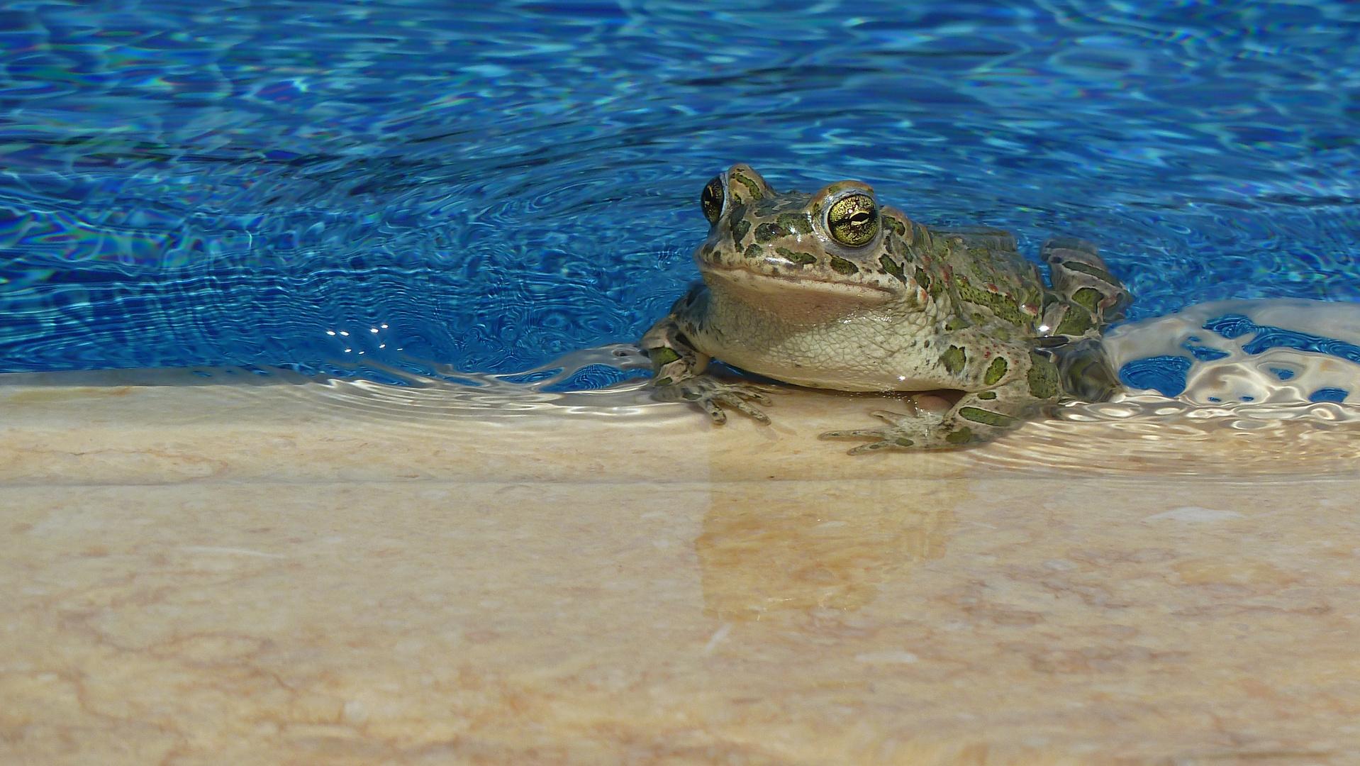 Pool-Frosch
