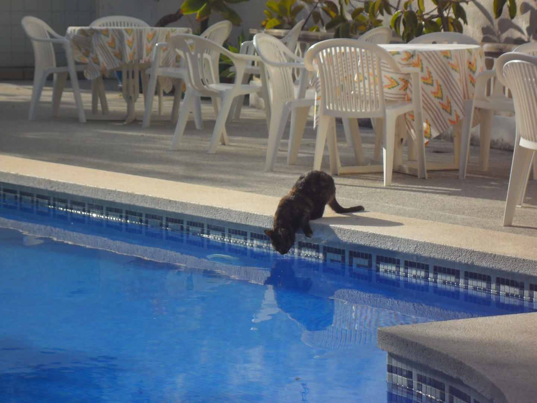 Pool-Katze