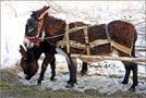 Poor Donkeys von Anca Silvia B.