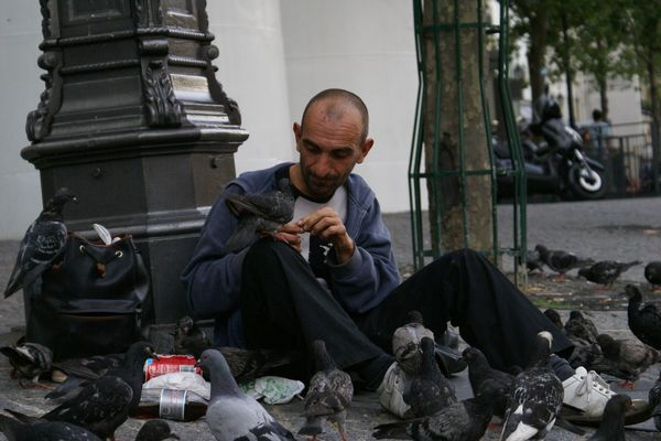 poor pigeons in Paris