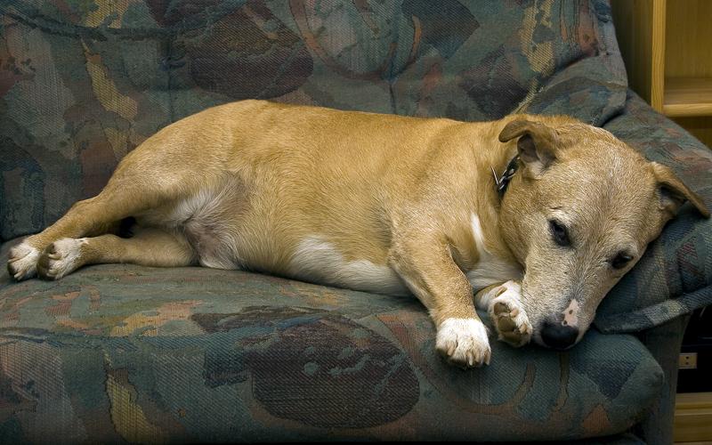 Popeye (14)  schläft mit offenen Augen