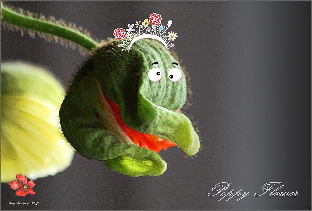 Poppy Flower.....